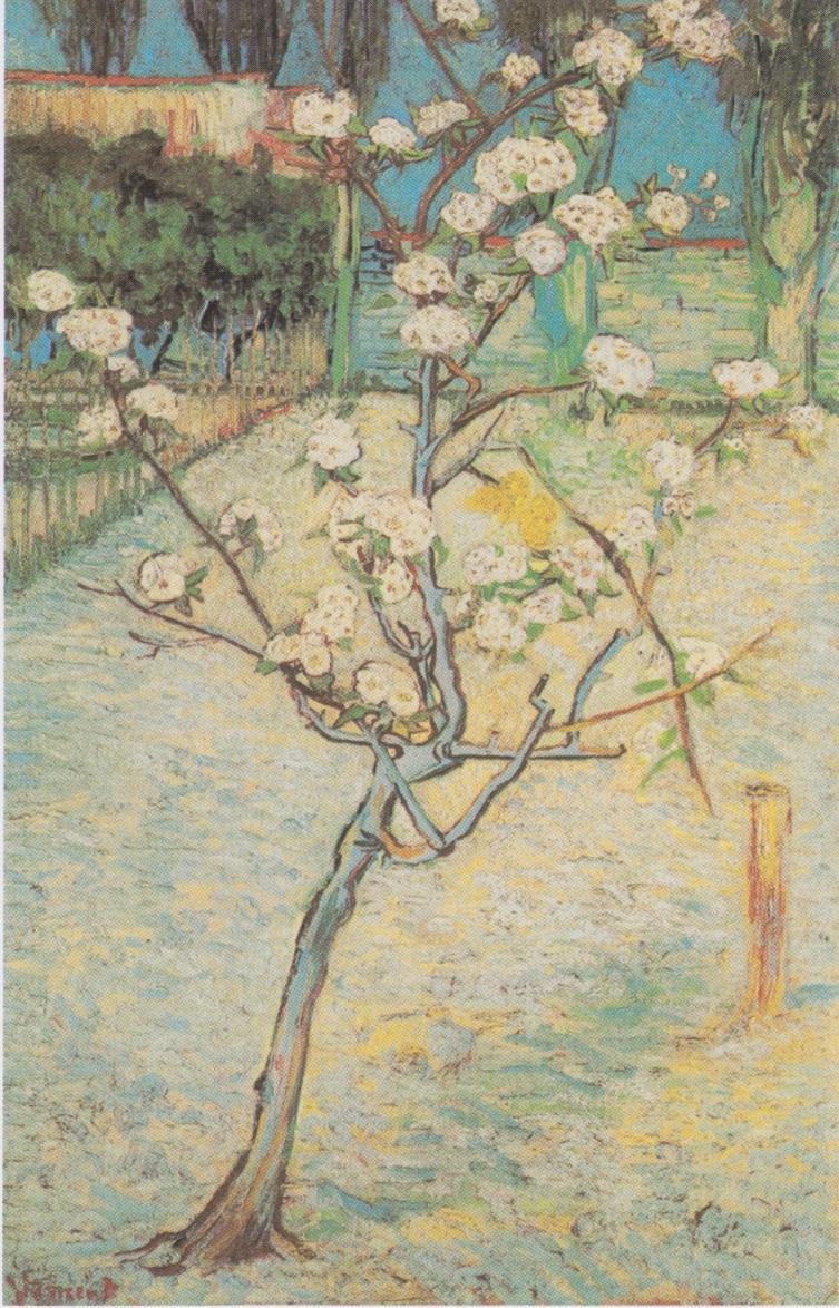 Van_Gogh_-_Blühender_Birnbaum