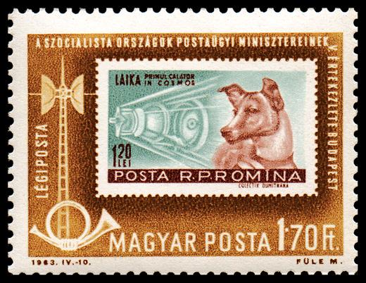 Laika_Hungarian_Stump